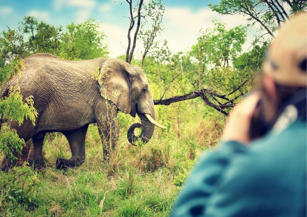 Elephant on walking trail